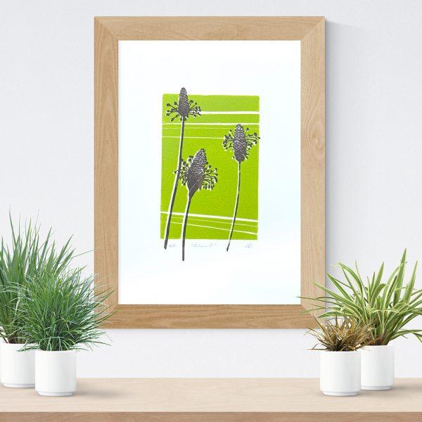 Edy & Fig 'ribwort' A4 print