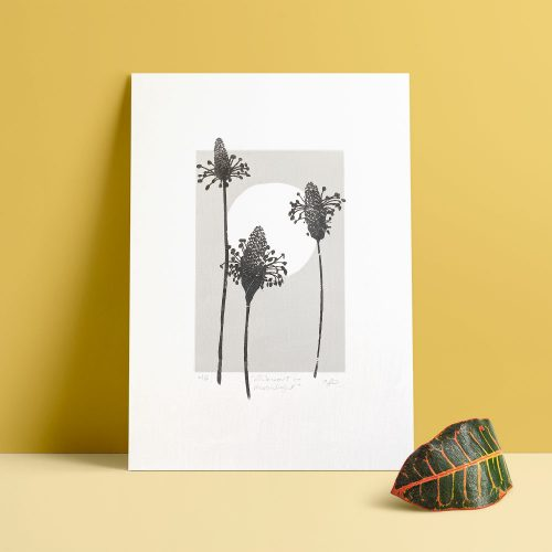 Edy & Fig 'ribwort in moonlight' A4 prints