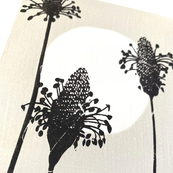 Edy & Fig - Ribwort in Moonlight A4 print